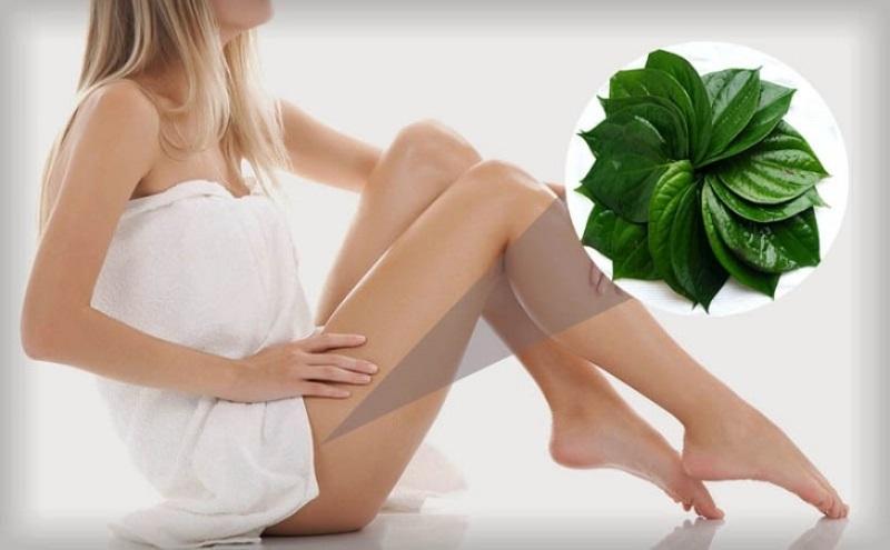 Lá trầu không lành tính là bài thuốc rất dễ tìm giúp điều trị viêm âm đạo rất tốt.