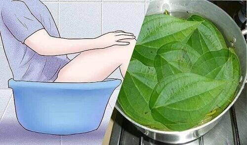 Rửa vùng kín bằng lá trầu không có tốt không