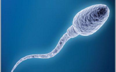 [ SỰ THẬT ] Tinh trùng sống bao lâu & cách tăng chất lượng tinh trùng